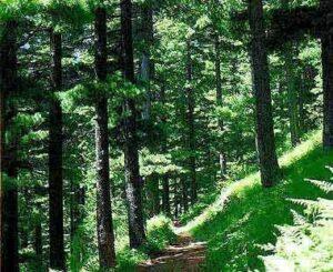 nacionalen park