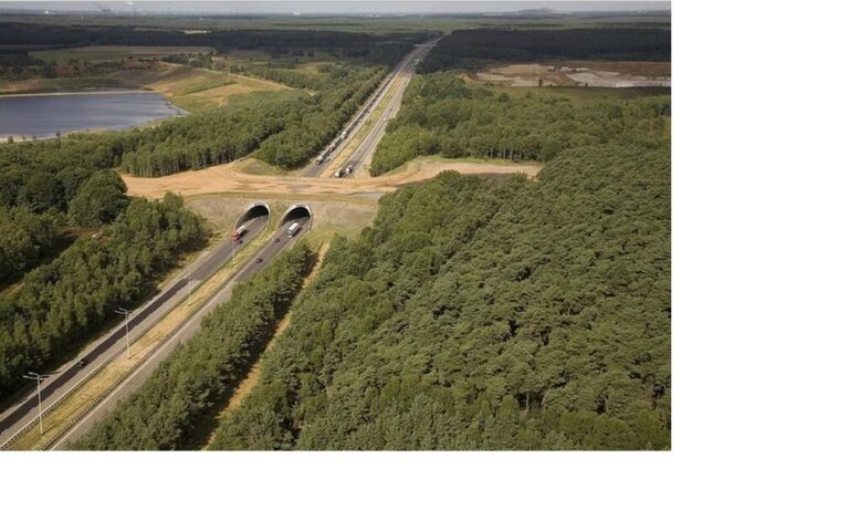 Патеки за животните за безбедни автопати