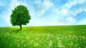 green nature wallpapers hd