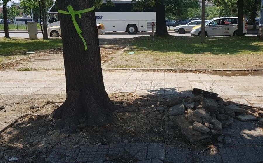 spasuvanje drva 1