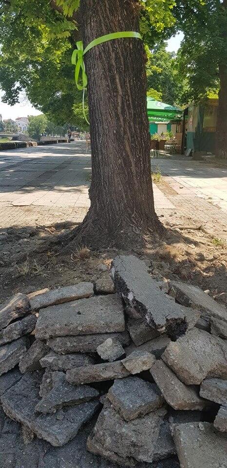 spasuvanje drva 4