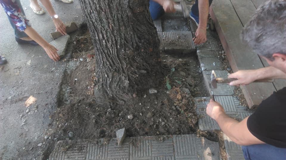 spasuvanje drva 9