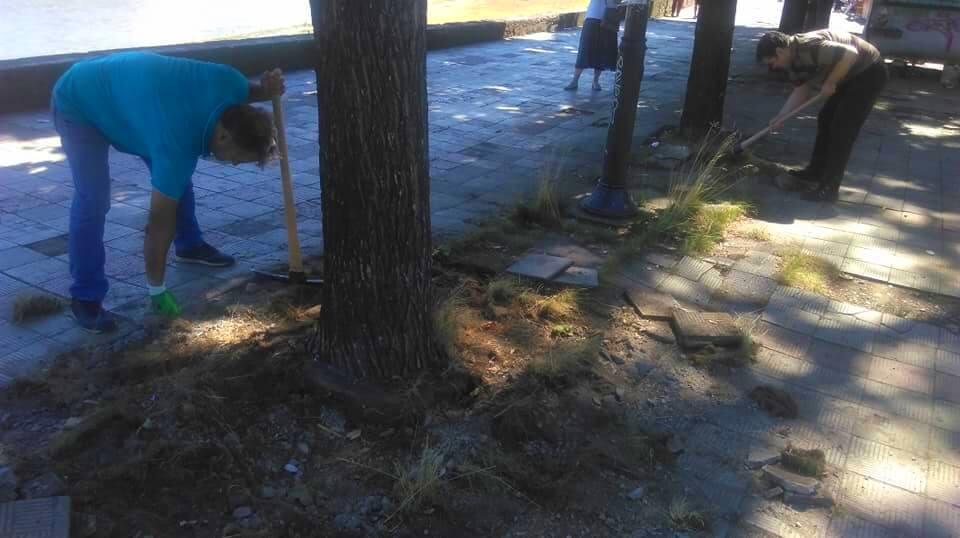 treta akcija za osloboduvanje na drvata 8
