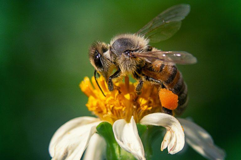 Наместо иницијативи за медоносни градини, нови давачки за пчеларите
